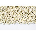 raw white beans