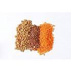 Heap of lentils