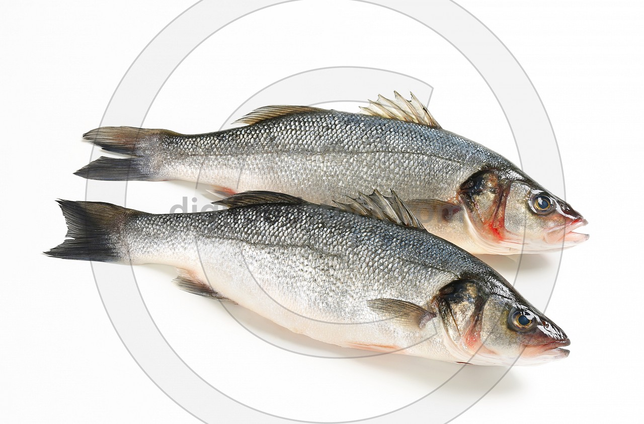 Two fresh sea bass fish